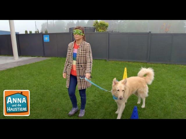 Hunde Im Einsatz Information Fur Kinder Anna Und Die Haustiere Spezial Youtube