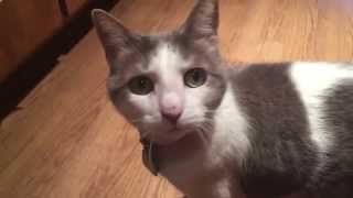 Introducing the Most Talkative Cat Ever!