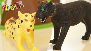 LIONS & CO - I Lions si scontrano senza esclusione di colpi: chi sarà il vincitore?