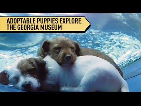 Dogs Explore Aquarium During Coronavirus Lockdown | Localish