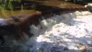 River Esk Salmon And Sea Trout - Salmon Leap 2