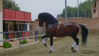 Продажа лошадей в Испании