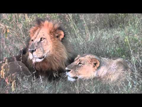 Lake Nakuru Kenya safari Feb 2016