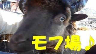 東京近郊の日帰り登山を、全行程をビデオ撮影しています。本館では、地...