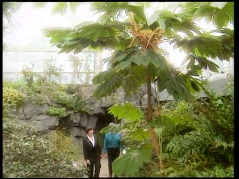 Brooklyn Botanical Garden Tour