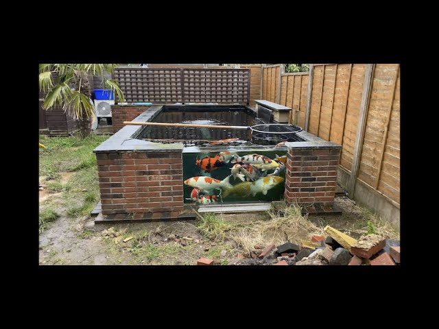 Moving House? Moving the Koi! THE POND MUST GO!