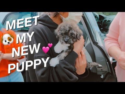 I GOT A NEW PUPPY!