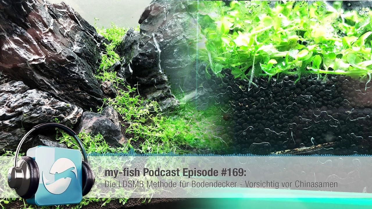 My Fish Org Die Ldsmb Methode Fur Bodendecker Vorsichtig Vor