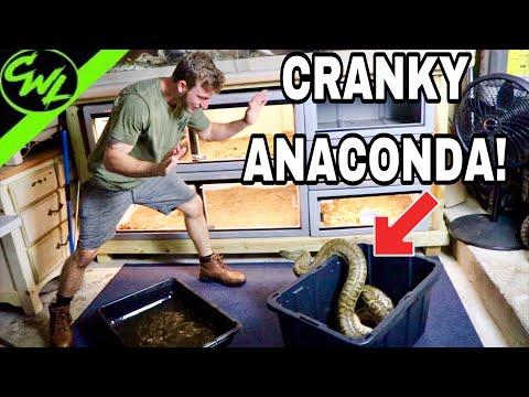 CLEANING CRANKY ANACONDAS!