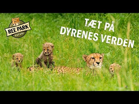 Ree Park Safari - kom helt på tæt alverdens dyr