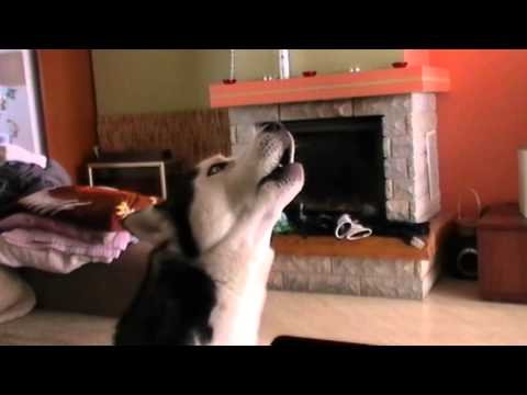 sound to annoy your dog affect on your dog