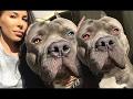 DOG BREED Best HIKING Fastest Dog Breed [Mr Fahey]
