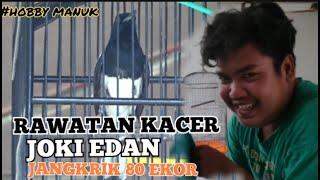 Download Lagu KACER Joki Edan Jangkrik 80 Ekor mp3