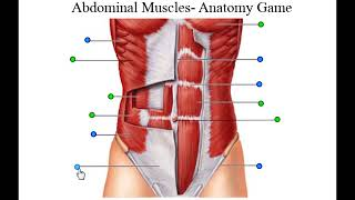 abdominal muscles, abs, sixpack , belly exercise, anatomy game run