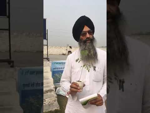 benefit of moringa in punjabi