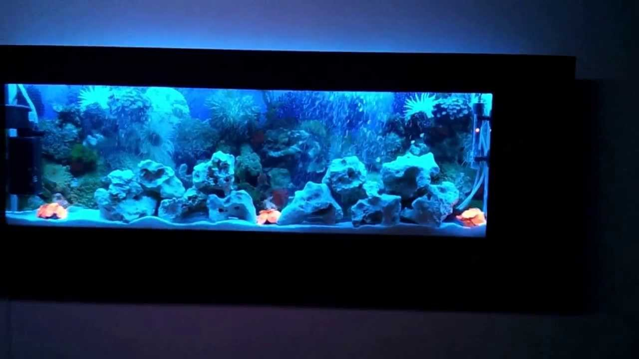 luxury wall mounted fish tank aquarium 2 www. Black Bedroom Furniture Sets. Home Design Ideas