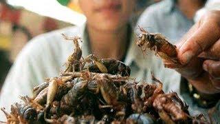 Böcekler Hakkında İlginç Bilgiler