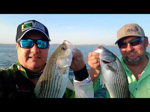 Striped Bass Fishing With The Arizona Fishing Guides