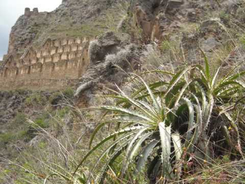 Wild Flowers & Plants at Peru's archaeological sites