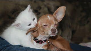 Tente não Rir ┃ Gatos e Cachorros divertidos