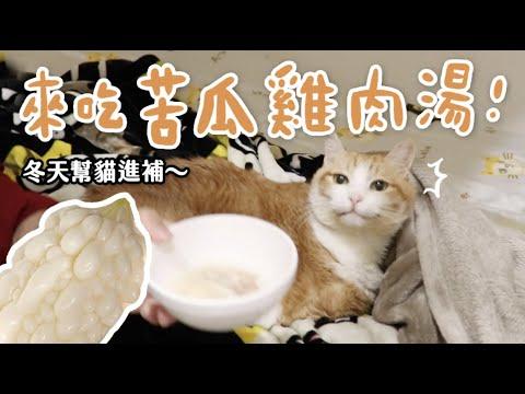 【黃阿瑪的後宮生活】來吃苦瓜雞肉湯!冬天幫貓進補~