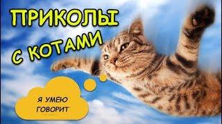 Лучшие и самые смешные приколы с котами и кошками Говорящий кот Смешные животные 2018 Funny Cats.
