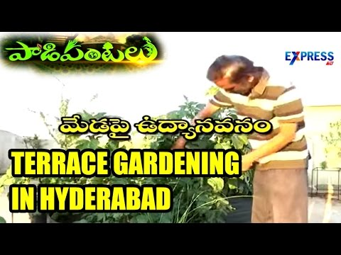 Terrace Garden developed by Tarakam in Hyderabad : Paadi Pantalu | Express TV