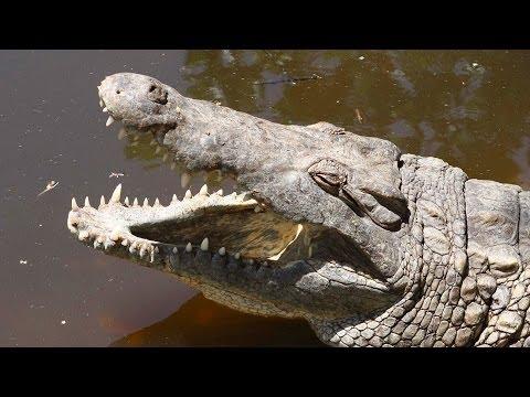 Journey to Uganda and Kenya. Part 2: Mombasa - Crocodiles & Hippos
