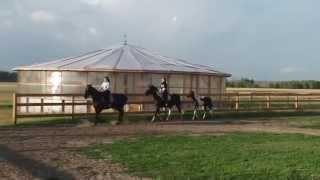 Уроки верховой езды на ферме в Рыжево