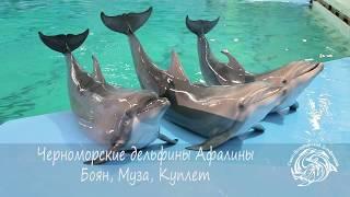 Санкт-Петербургский дельфинарий - Шоу черноморских дельфинов афалин Муза, Боян, Куплет