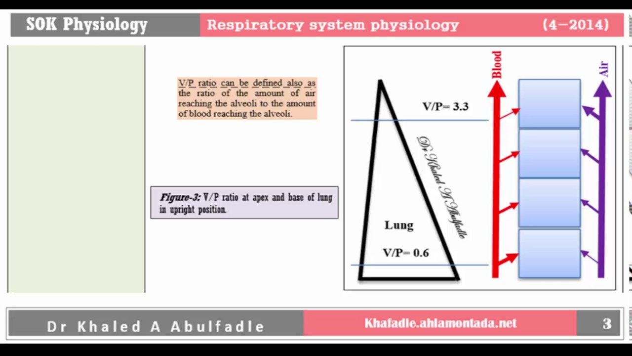 Ventilation Perfusion Ratio : Ventilation perfusion ratio by dr khaled a abulfadle