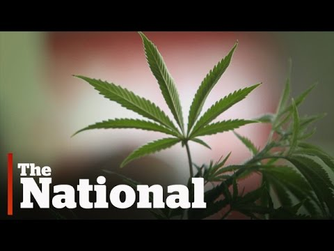 How marijuana legalization could change Canada