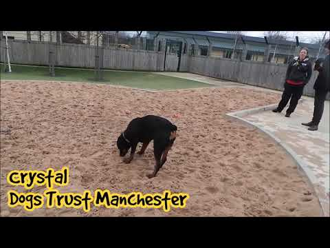 Dogs Trust Manchester - Crystal