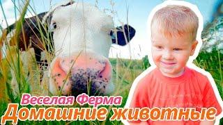 Домашние животные для детей | На ВЕСЕЛОЙ ФЕРМЕ. животные для детей