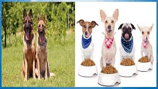 The Best Dog Food for Weight Loss