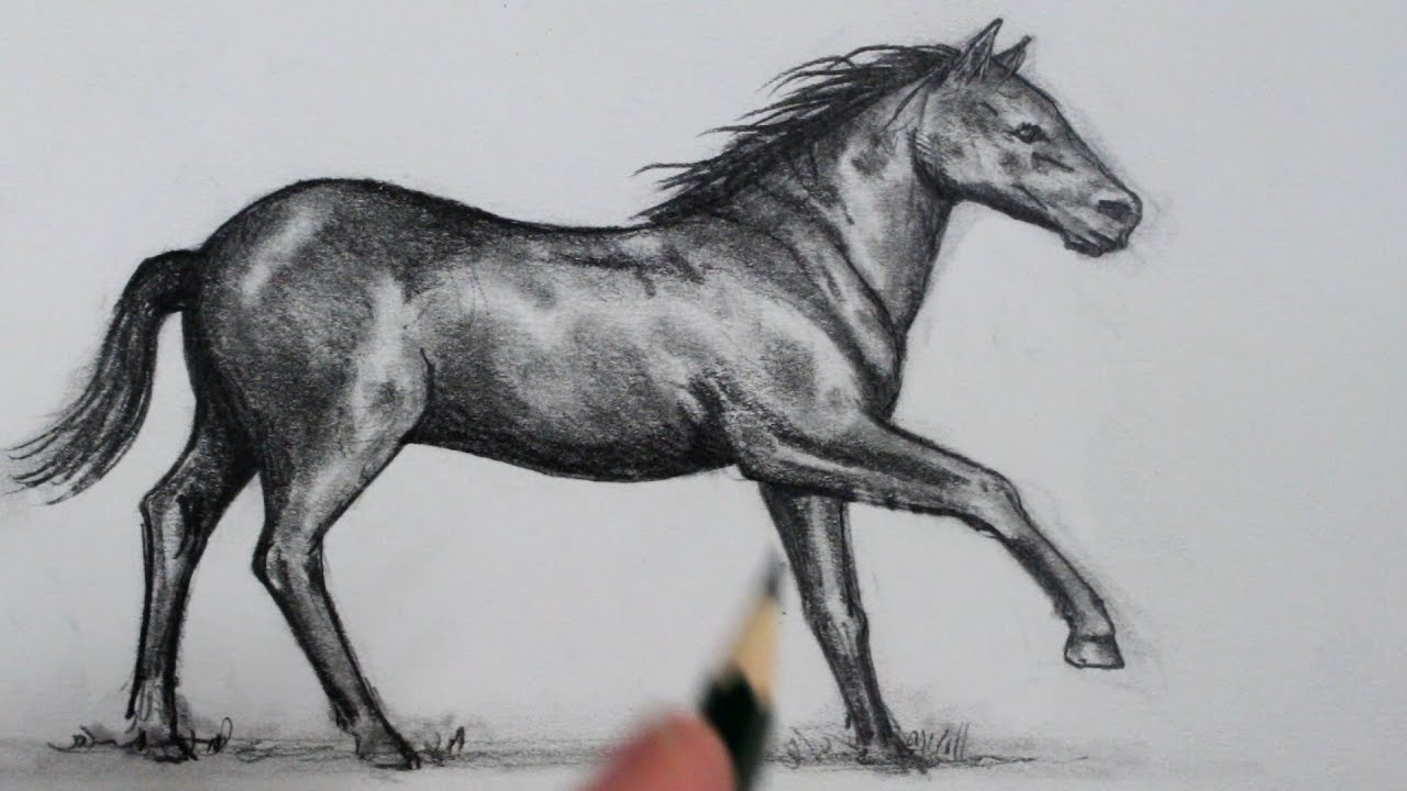1 Man 1 Horse Video Link how to draw a horse: stepstep