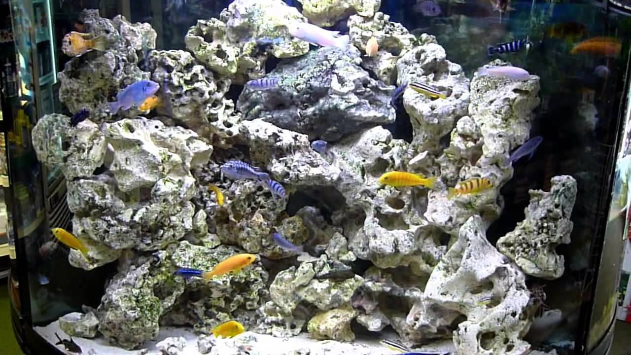 Malawi cichlid fish tank corner aquarium youtube for Cichlid fish tank
