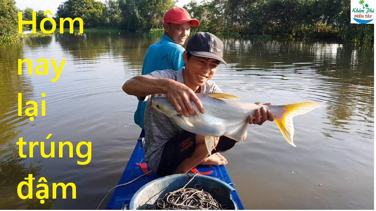 462 | Giăng câu cá tra hôm nay phá kỷ lục P1 | Fishing