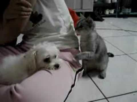 Cat Pushes Dog Too Far