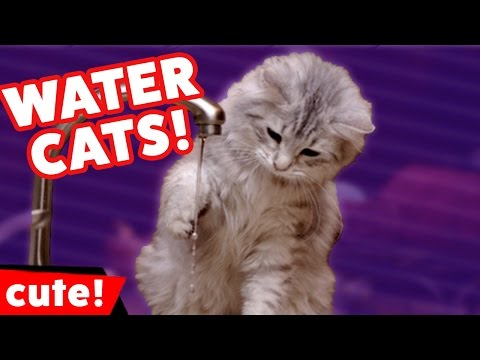 Funniest Cats Hate Water Videos Compilation December 2016 | Kyoot Animals