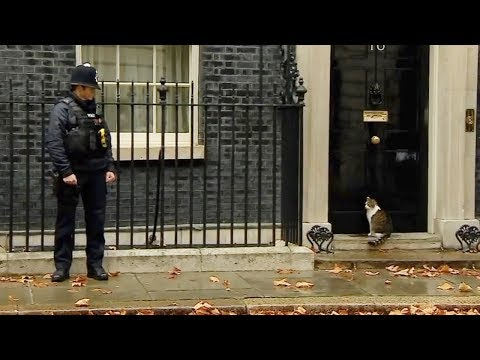 Larry the cat knocks on the Downing Street's door
