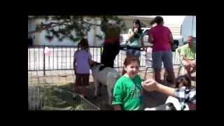 ponies n petting zoo 2 u.MPG