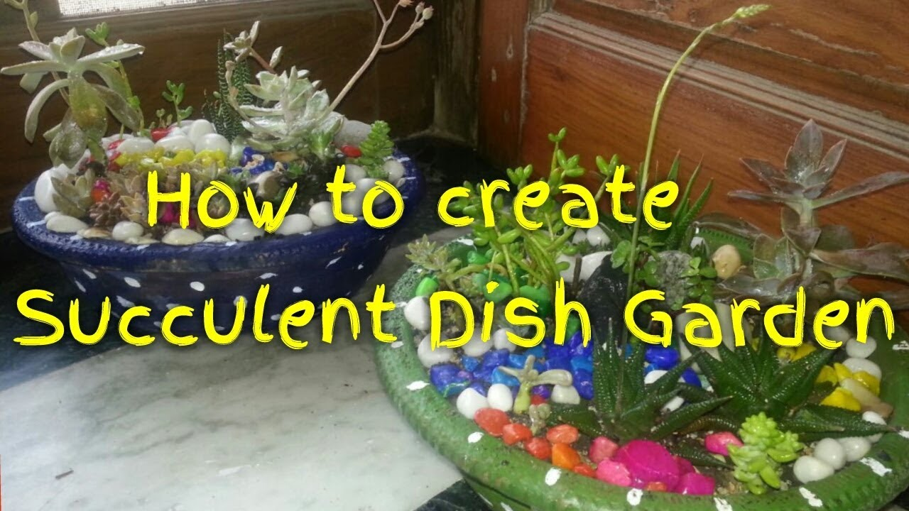 How To Create Succulent Dish Garden At Home DIY