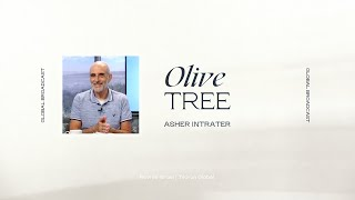 Olive Tree | Asher Intrater
