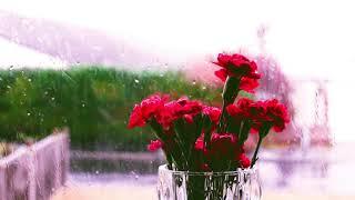Soothing Raining Sound, rain sound, Relaxing sound, Rainy day, Deep sleep, sleeping,Refreshing sound