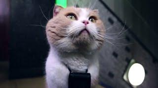 """手がかりは全国のネコから集めた""""証言VTR""""!緑の看板の近くに隠された宝..."""