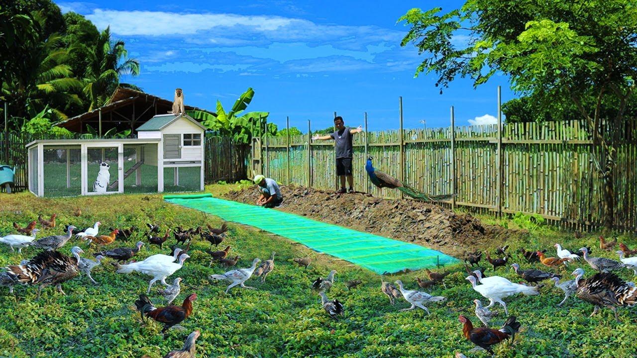 Free-range farming (Ep.107) -Building Azolla tank! Starting a Duck Farm  & Parakeet aviary update