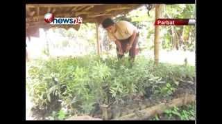 अनार खेती- NEWS24 TV