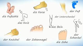Нога (тело человека). Слова на немецком