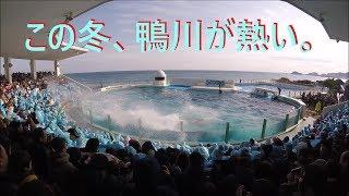 鴨川シーワールド2019 シャチパフォーマンス395 GoProで冬でも熱い鴨シーをセーフティーゾーンから4Kで撮ってみた killer whale show